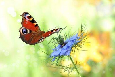 Vinilo 198 mariposa