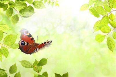 Vinilo 204 mariposa