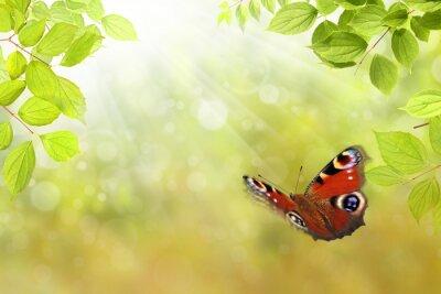 Vinilo 206 mariposa