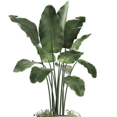 Vinilo 3d illustration of tropical plants banana