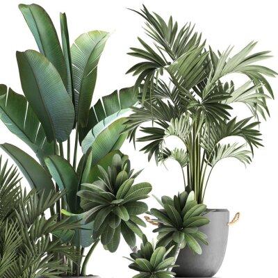 Vinilo 3d illustration of tropical plants on white background