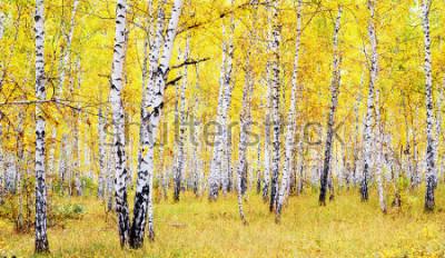 Vinilo abedul otoño bosque