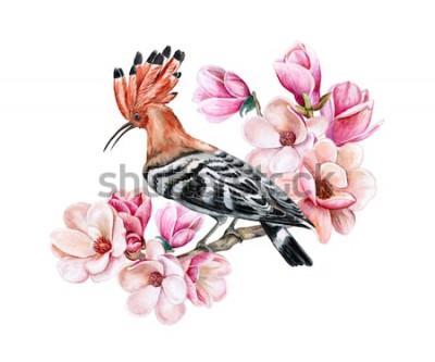 Vinilo Abubilla del pájaro que se sienta en una rama floreciente de la primavera. Flores de magnolia Acuarela. Ilustración. Modelo. Clipart. De cerca. Tarjeta