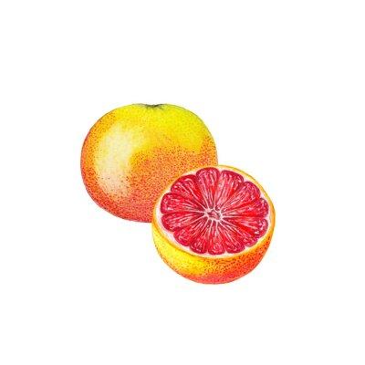 Vinilo Acuarela de pomelo