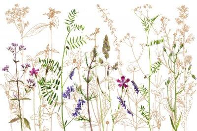 Vinilo Acuarela dibujo flores y plantas