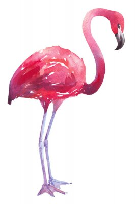 Vinilo Acuarela ilustración de un flamenco