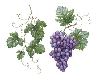 Vinilo Acuarela ilustración de uvas con hojas