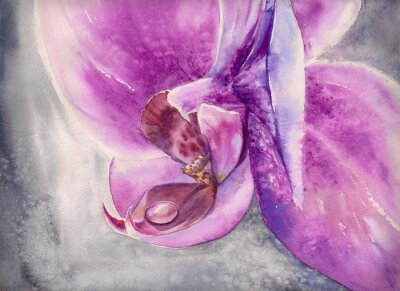 Vinilo Acuarela jadeo de orquídea rosa flor con gota de agua pequeña.