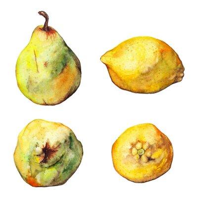 Vinilo Acuarela limón cítricos pera conjunto de frutas