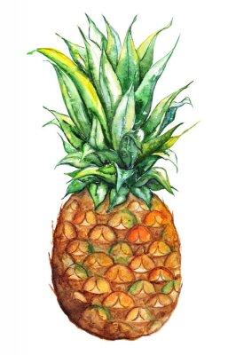 Vinilo Acuarela mano de piña exótica frutas tropicales aisladas