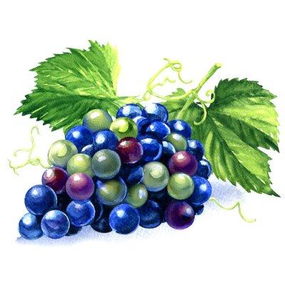 Vinilo Acuarela manojo de uvas azules