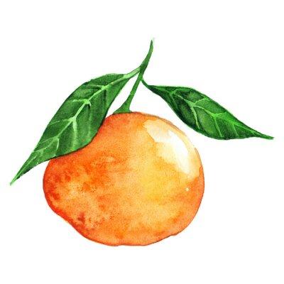 Vinilo Acuarela naranja madura mandarina cítricos aislados