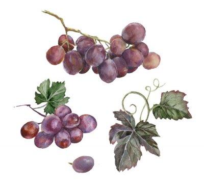 Vinilo acuarela racimo de uvas rojas