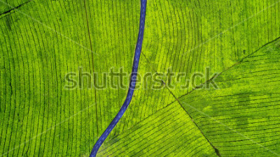 Vinilo Aerial view of empty highway on the tea plantation. Shot at Subang highlands, Indonesia