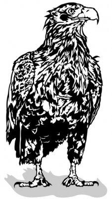 Vinilo Águila en blanco y negro - ilustración contorno, vector