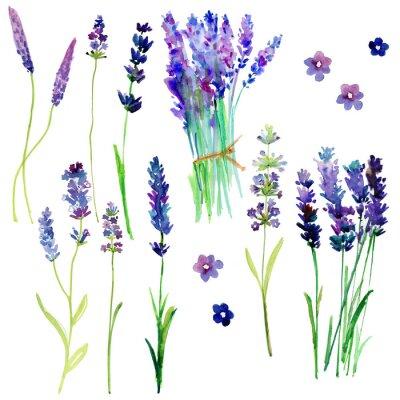 Vinilo Aislado flores de lavanda de Provenza. Conjunto floral de acuarela para su diseño.