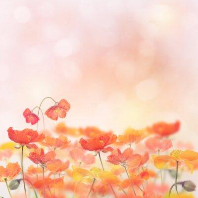 Vinilo Amapola Flores Flor