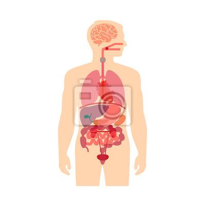 Anatomía del cuerpo humano, los sistemas de órganos médica vector ...