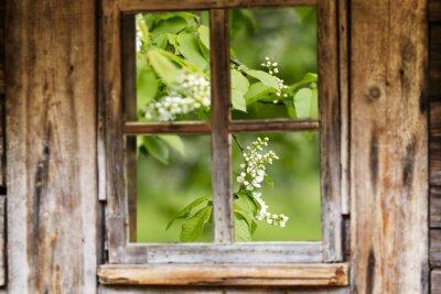 Vinilo Antiguo marco de madera de la ventana, la primavera, los árboles en flor.