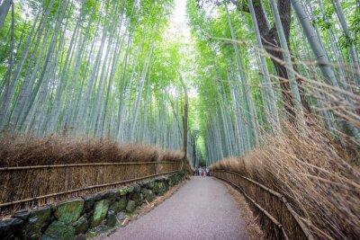 Vinilo Arashiyama Arboleda de bambú de Kyoto, Japón.
