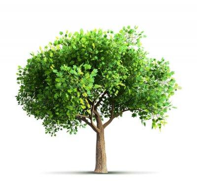 Vinilo Árbol de arce aislado