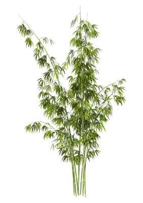 Vinilo Árbol de bambú