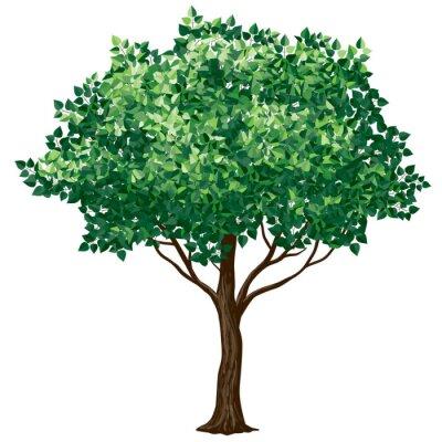 Vinilo Árbol de follaje