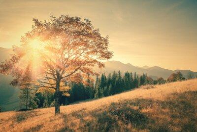 Vinilo Árbol de otoño y el rayo de sol cálido día de paisaje en tonos de la vendimia