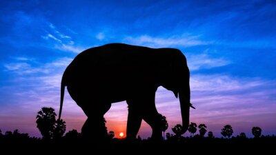 Vinilo Árbol elefante andpPalm en el tiempo crepuscular