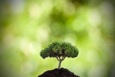 Vinilo árbol en primer plano