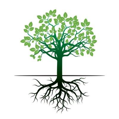 Vinilo Árbol y raíces. Ilustración vectorial.