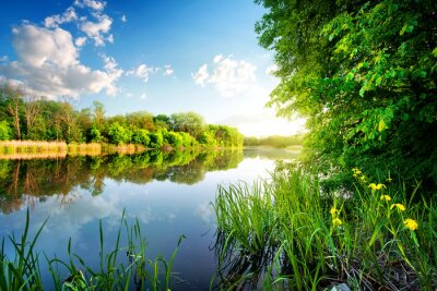 Vinilo Árboles por el río tranquilo