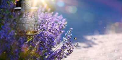 Vinilo arte verano o primavera hermoso jardín con flores de lavanda
