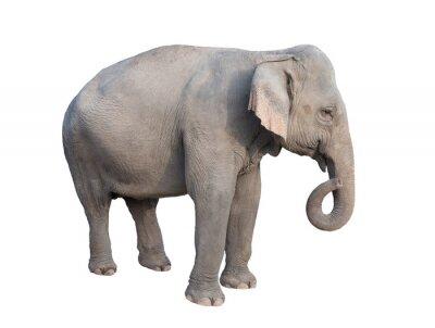 Vinilo asia elefante