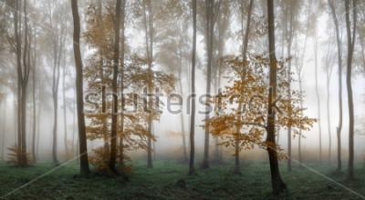 Vinilo Autumn foggy forest. Balkan Mountains, Bulgaria.