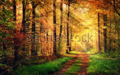 Vinilo Autumn forest scenery with rays of warm light illumining the gold foliage and a footpath leading into the scene