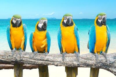 Vinilo Azul y oro Guacamayo en la hermosa playa tropical y el mar