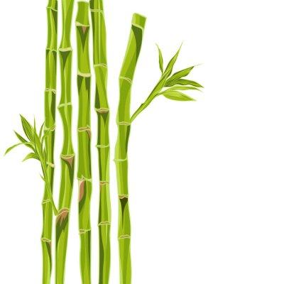 Vinilo Bacground de bambú verde dibujado a mano con espacio para el texto
