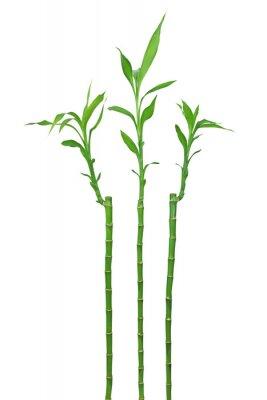 Vinilo Bambou