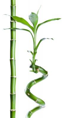 Vinilo Bambou zen