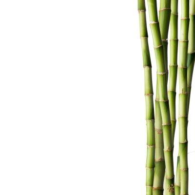 Vinilo Bambú fresco con bosque de bambú en el fondo