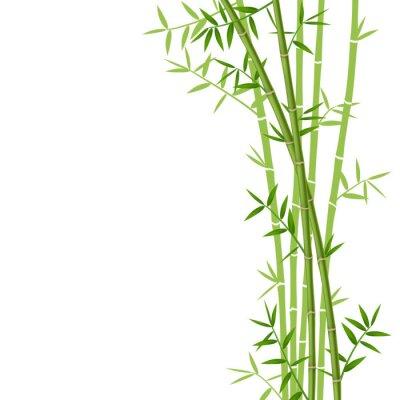 Vinilo Bambú verde sobre fondo blanco, ilustración vectorial