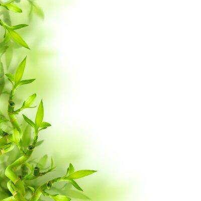 Vinilo Bambú y hojas verdes, fondo