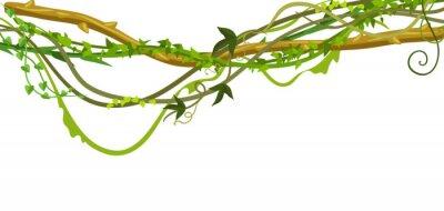 Vinilo Banner de ramas de lianas silvestres retorcidas.