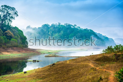 Vinilo beautiful landscape with wild forest and river with fog in India. Periyar National Park, Kerala, India