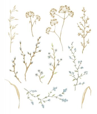 Vinilo Big set with dry herbs, willow branches and twigs with flowers and berries isolated on white background. Watercolor hand drawn illustration