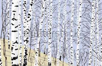 Vinilo birch grove in the spring