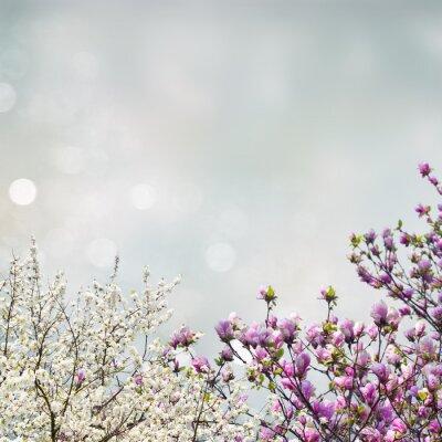 Vinilo Blooming árbol de magnolia