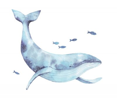 Vinilo Blue whale watercolor illustration isolated on white. Big wild underwater animal beautiful blue violet white watercolor whale ballena painting. Mammal marine or oceanic water animal swimming.