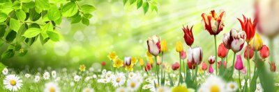 Vinilo Blumen 1030